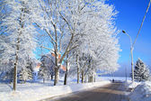 Tree in snow near roads — Stockfoto