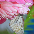 Butterfly is under flower to hide from rain — Stock Photo #13570105