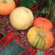 Pumpkin set on rural market — Photo