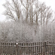 Old fence in winter wood — Stock Photo #13578975