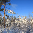 Stockfoto: Pines in snow on celestial background