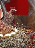 Hen in jack on golden egg — Stock Photo