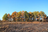 Oak wood after fire — Stock Photo