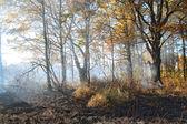Smoke after fire in oak wood — Stock Photo