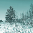 Small pine on winter field — Stock Photo #13892082