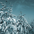 Pines in snow on celestial background — Stock Photo #13892207
