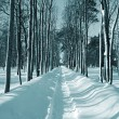 Snow lane in winter park — Stock Photo #13892556