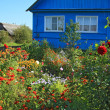 Stock Photo: Summer flowerses near rural building