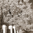 Stock Photo: Lane in winter town park, sepia