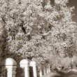 Royalty-Free Stock Photo: Lane in winter town park, sepia