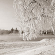 Stock Photo: Tree in snow against old fortress, sepia
