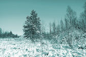 Small pine on winter field — Foto Stock