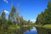Dry tree on coast wood lake — Stock Photo