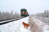 Redhead dog near train — Stock Photo