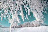 Tree in snow on celestial background — Stock Photo