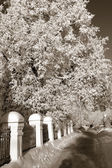 Lane in winter town park, sepia — Stock Photo