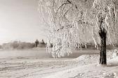 在反对旧的堡垒,棕褐色雪树 — 图库照片