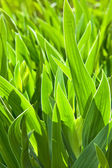 Fresh spring green grass. — Stockfoto