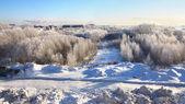 зимний город. морозный декабря. — Стоковое фото