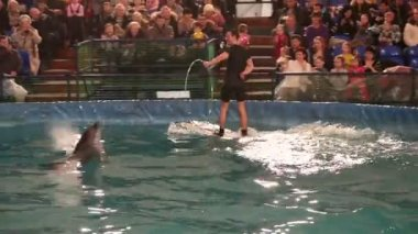 Trainer rides a beluga. Bottlenose dolphin jumping into a moving hoop. — Stock Video