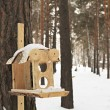 Feeder for squirrels and birds in the winter woods. — Foto de Stock