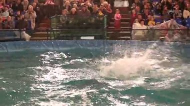 Bottlenose dolphin jump out of the water. — Stock Video