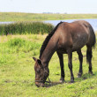 Horse grazes near a pond. — Stock Photo