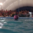 Dolphins throw the ball to the audience. Representation in the Dolphinarium. — Stock Video