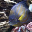 Beautiful fish in the marine aquarium — Stok video