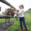 Little girl tenderly stroking donkey. — Stockfoto #39139383