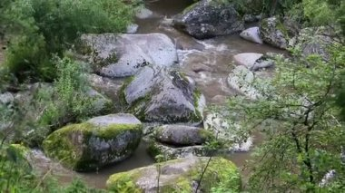 Belokurikha mountain river in Altai Krai. Russia. — Stockvideo