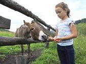 Little girl feeding donkey carrot. — Stock Photo