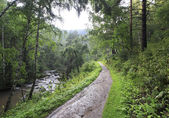 Belokurikha river in the forest on the hillside Sinyuha. Altai K — Stock Photo