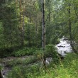 Belokurikhriver in forest on hillside Sinyuha. Altai K — Stock Photo #41459219