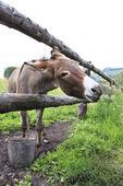 Donkey in the summer aviary.  — Stock Photo