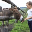 Stock Photo: Little girl feeding donkey carrot.