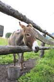 Donkey in the summer aviary.  — Stock Photo