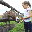 Little girl feeding donkey carrot. — Stock Photo #45129989