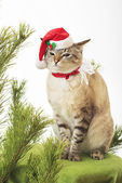 Funny cat in a suit of Santa Claus. — Stock Photo