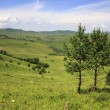 Beautiful two pine trees in the mountains. — Stock Photo #45886413