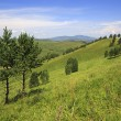 Two beautiful pine trees in the mountains. — Stock Photo #46309213