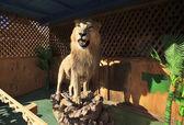 Stuffed lion. — Stock Photo