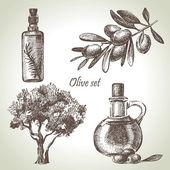 Ensemble d'olives dessiné à la main — Vecteur