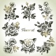 Floral set. Hand drawn illustrations of roses — Stock Vector #19979009