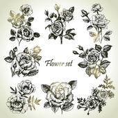 Floral set. Hand drawn illustrations of roses — Stock Vector