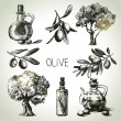 Hand drawn olive set — Stock Vector #31069993