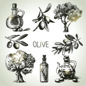 Hand drawn olive set — Stock Vector