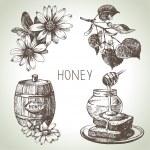Honey set. Hand drawn vintage illustrations — Stock Vector #36536367
