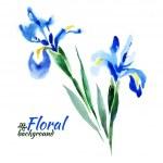 Beautiful watercolor paint blue irises — Stockvector  #37486639
