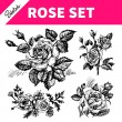 Sketch floral set. Hand drawn illustrations of roses — Stock Vector #43552607